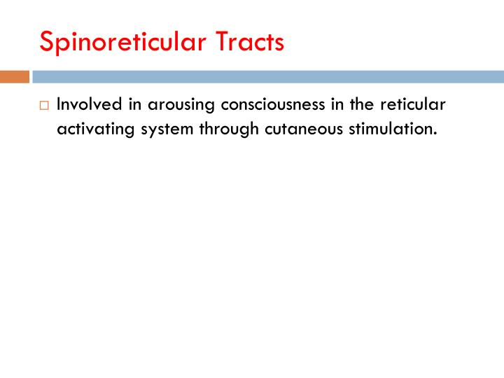 Spinoreticular Tracts