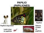papilio papiliones