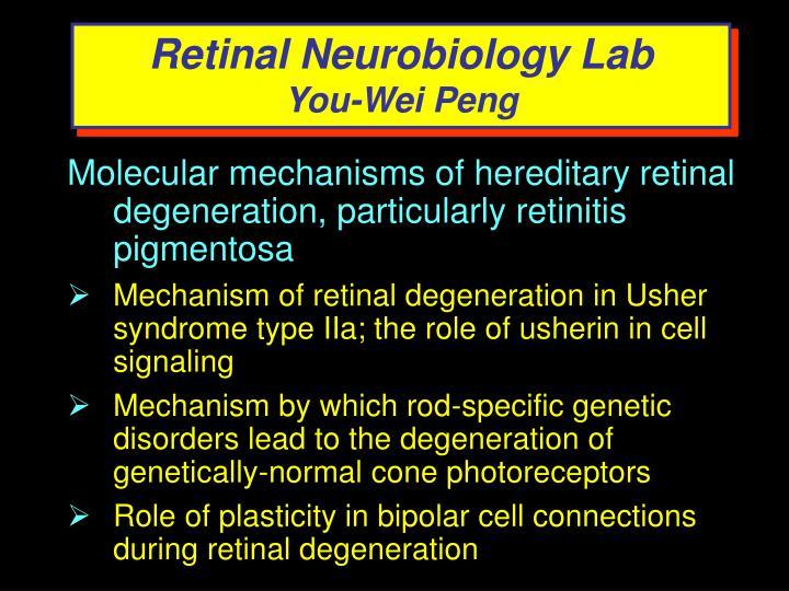 Retinal Neurobiology Lab