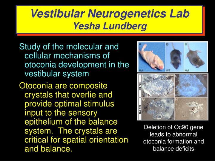 Vestibular Neurogenetics Lab
