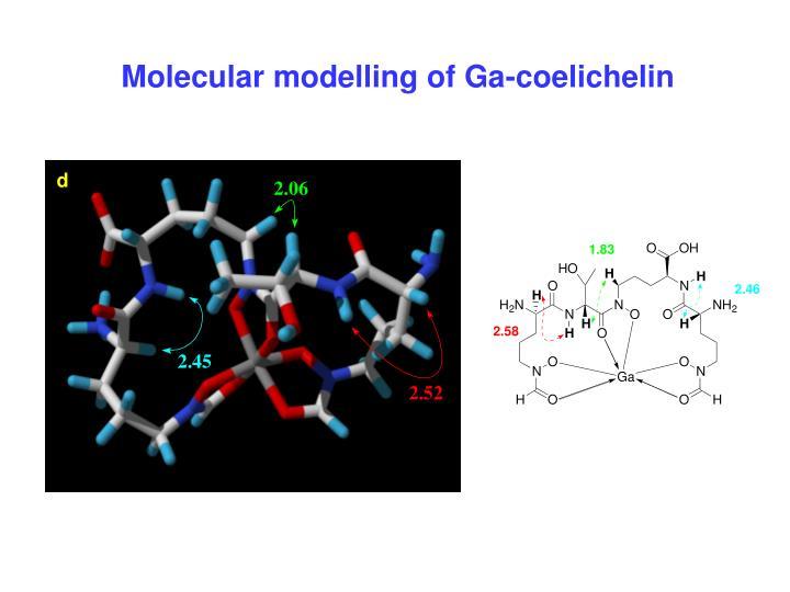Molecular modelling of Ga-coelichelin