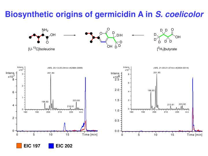 Biosynthetic origins of germicidin A in
