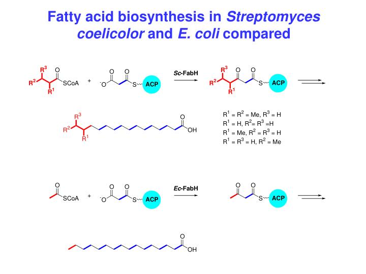 Fatty acid biosynthesis in