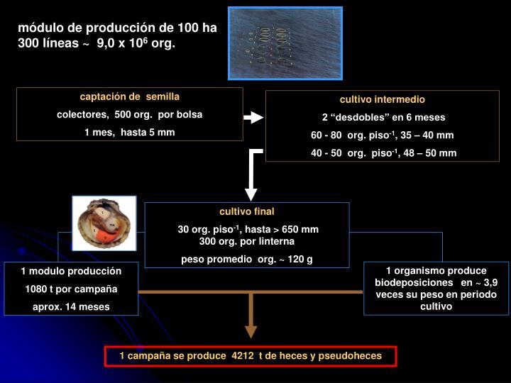 módulo de producción de 100 ha