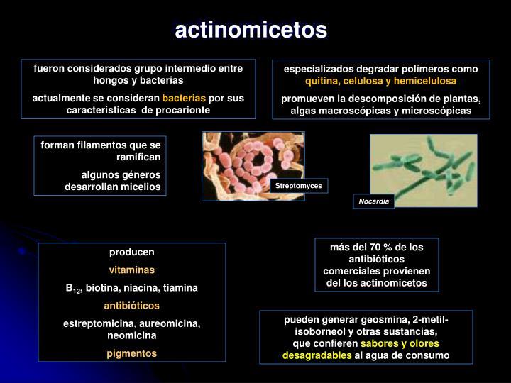 actinomicetos