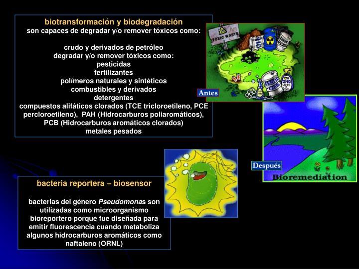 biotransformación y biodegradación