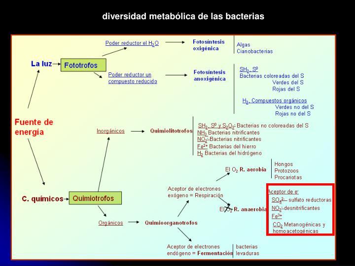 diversidad metabólica de las bacterias