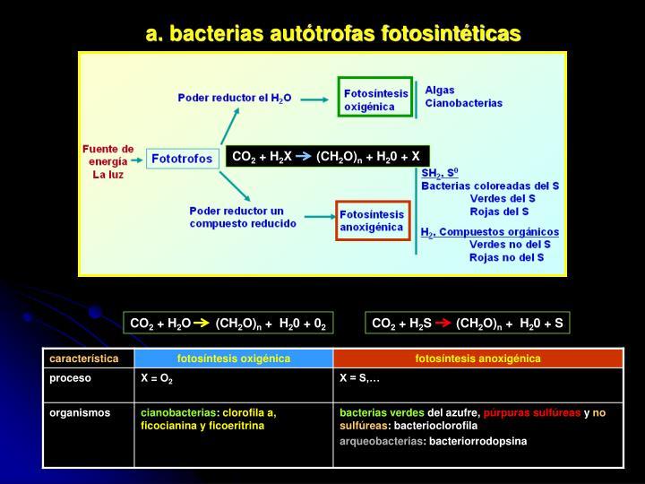 a. bacterias autótrofas fotosintéticas