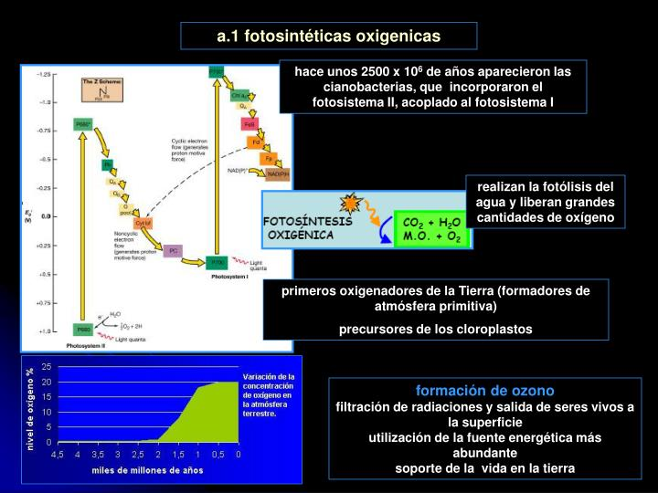 a.1 fotosintéticas oxigenicas