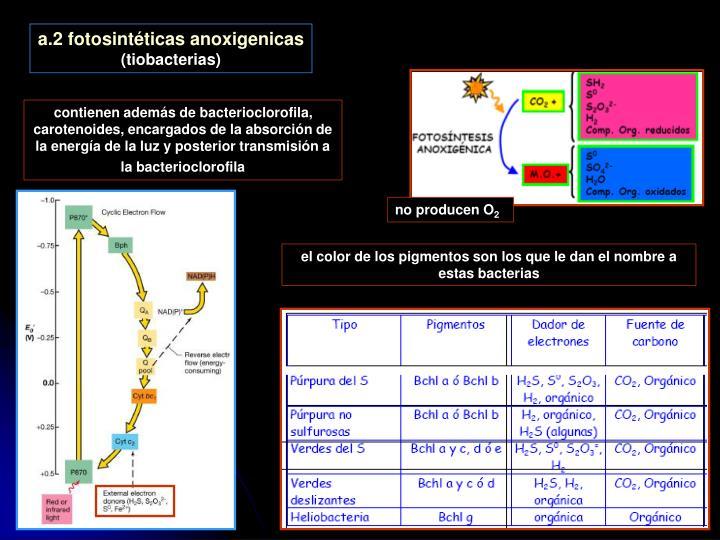 a.2 fotosintéticas anoxigenicas