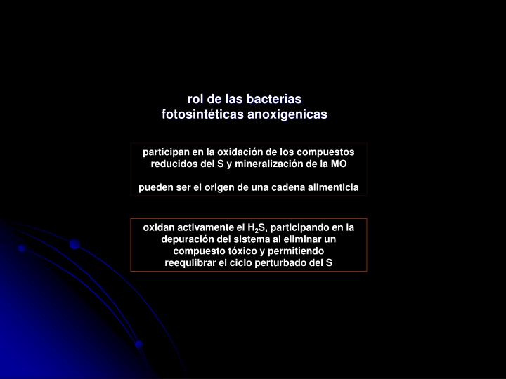 rol de las bacterias fotosintéticas anoxigenicas