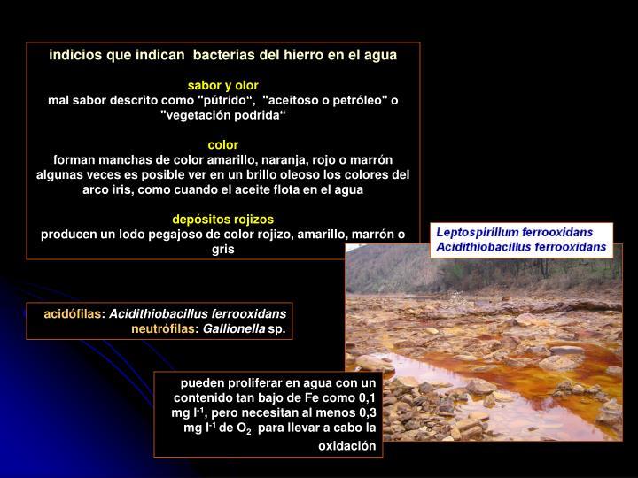 indicios que indican  bacterias del hierro en el agua