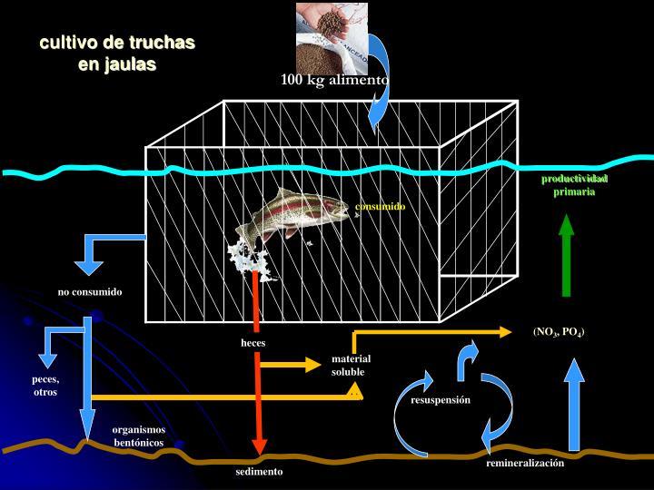cultivo de truchas en jaulas