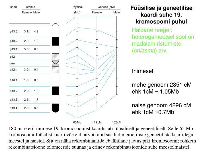 Füüsilise ja geneetilise kaardi suhe 19. kromosoomi puhul