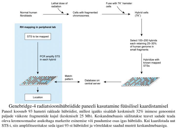 Genebridge-4 radiatsioonihübriidide paneeli kasutamine füüsilisel kaardistamisel