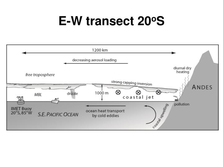 E-W transect 20