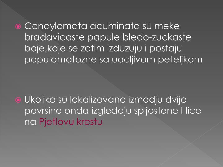 Condylomata