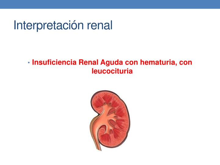 Interpretación renal