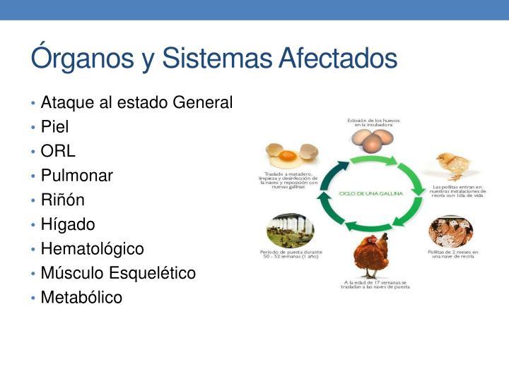 Órganos y Sistemas Afectados