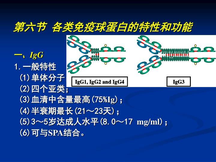 第六节 各类免疫球蛋白的特性和功能