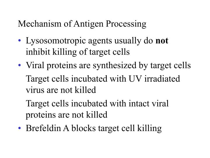 Mechanism of Antigen Processing