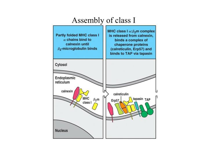 Assembly of class I