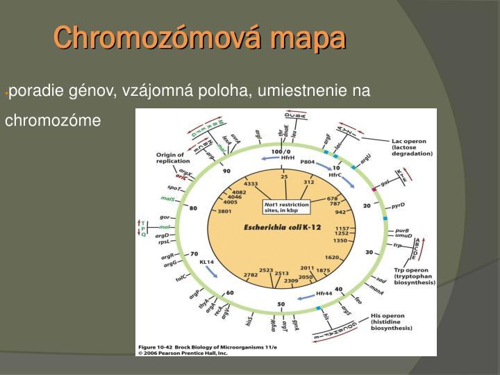 Chromozómová mapa