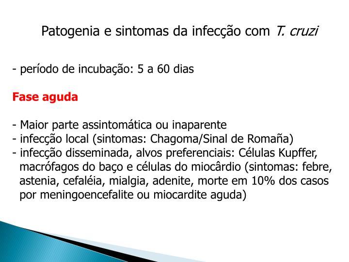 Patogenia e sintomas da infecção com