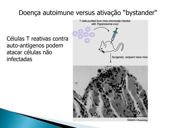 Células T reativas contra