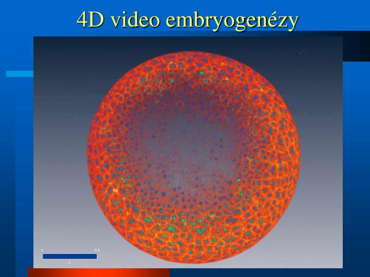 4D video embryogen