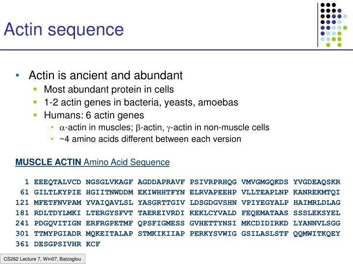 Actin sequence