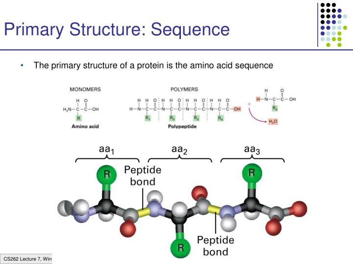 Primary Structure: Sequence
