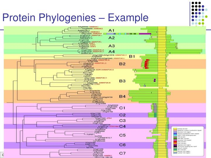 Protein Phylogenies – Example