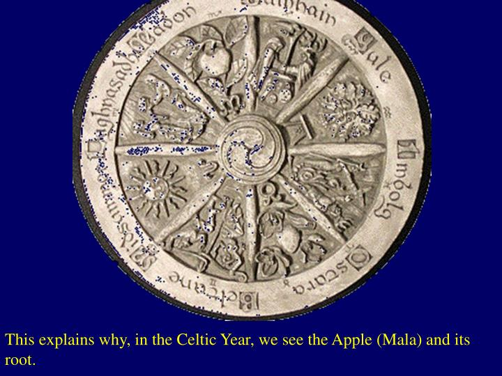 This explains why, in the Celtic Year, we see the Apple (Mala) and its root.