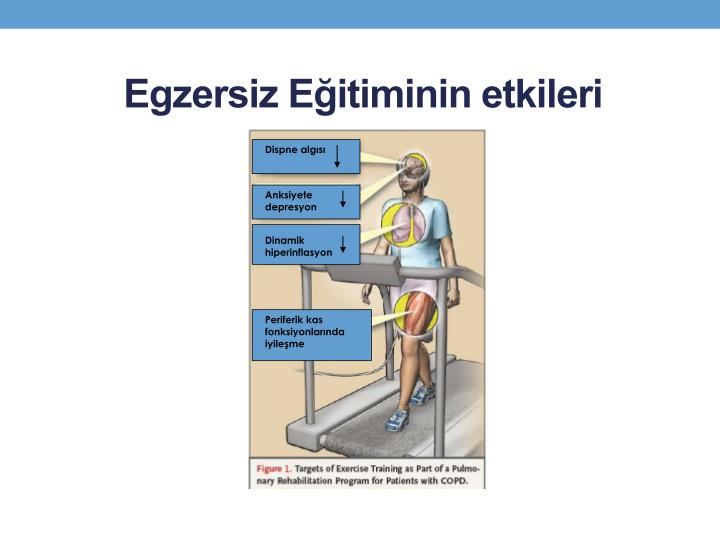 Egzersiz Eğitiminin etkileri