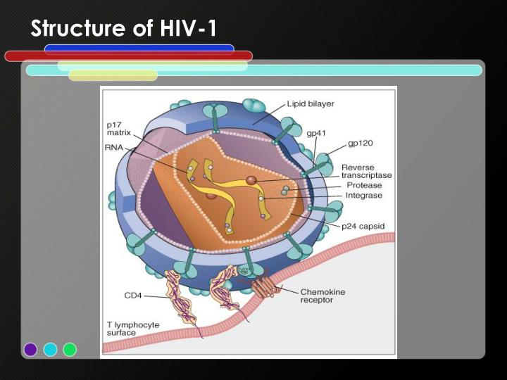 Structure of HIV-1