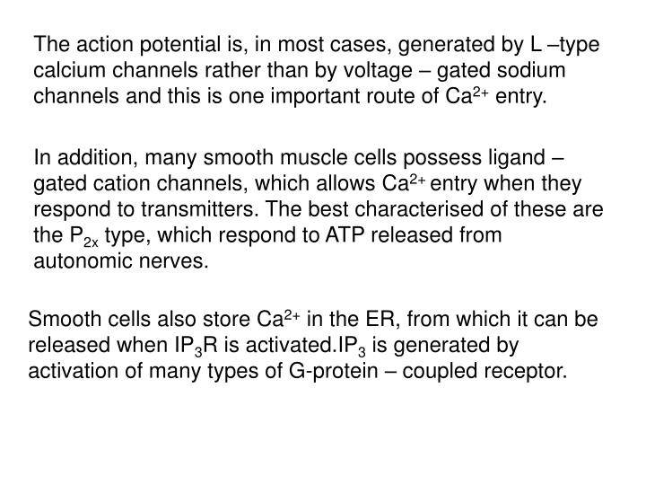 The action potential is, in most cases, generated by L –type calcium channels rather than by voltage – gated sodium channels and this is one important route of Ca