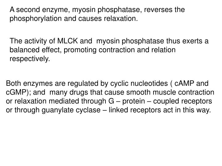 A second enzyme, myosin phosphatase, reverses the phosphorylation and causes relaxation.