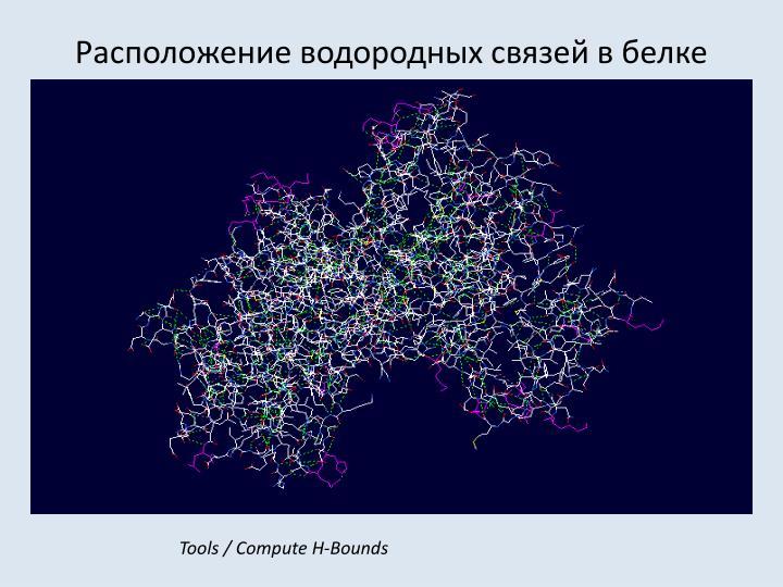 Расположение водородных связей в белке