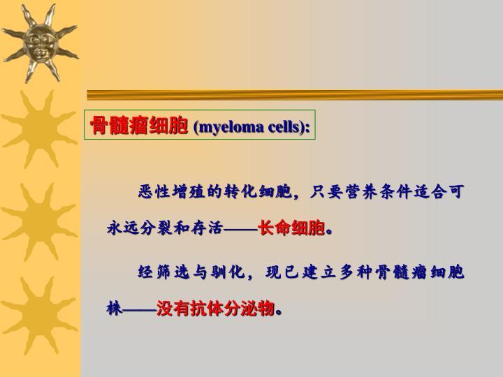 骨髓瘤细胞