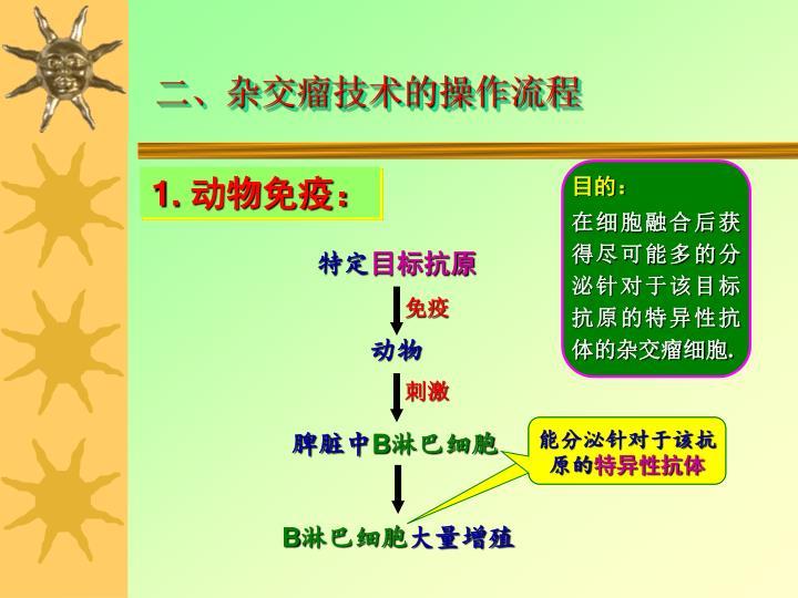 二、杂交瘤技术的操作流程