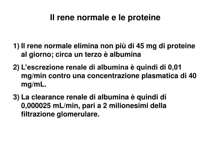 Il rene normale e le proteine