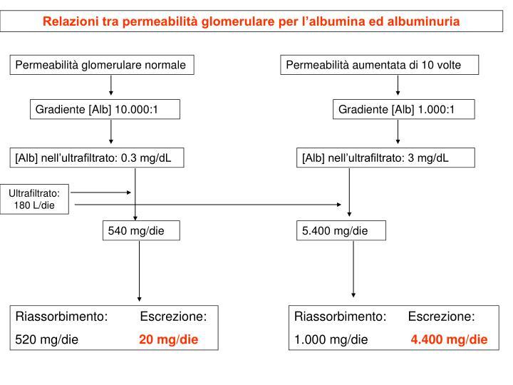 Relazioni tra permeabilità glomerulare per l'albumina ed albuminuria