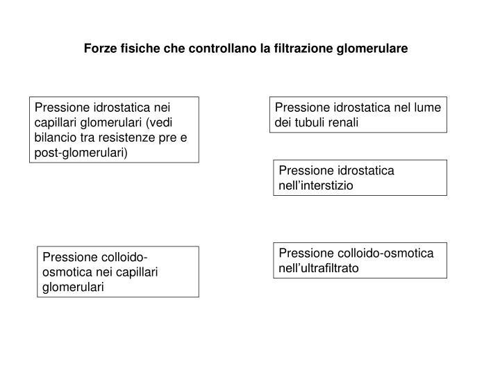 Forze fisiche che controllano la filtrazione glomerulare