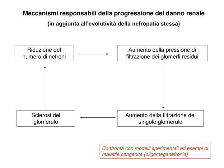 Meccanismi responsabili della progressione del danno renale