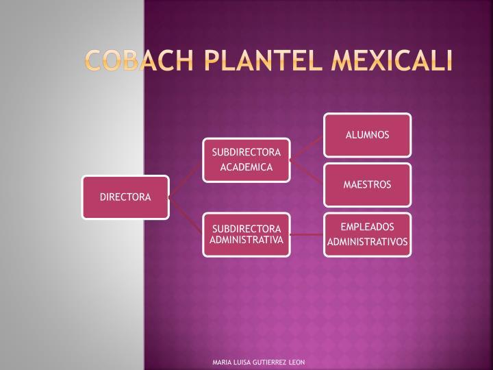 COBACH plantel Mexicali