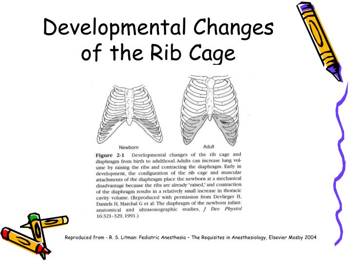Developmental Changes of the Rib Cage