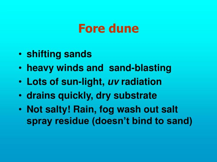 Fore dune
