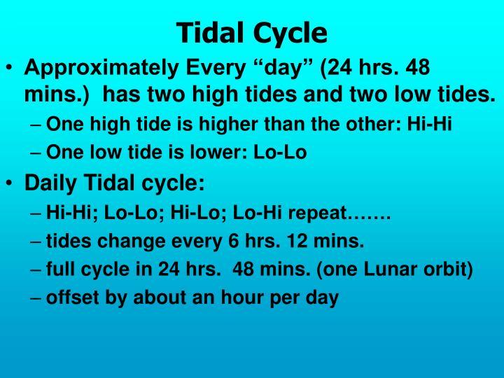 Tidal Cycle