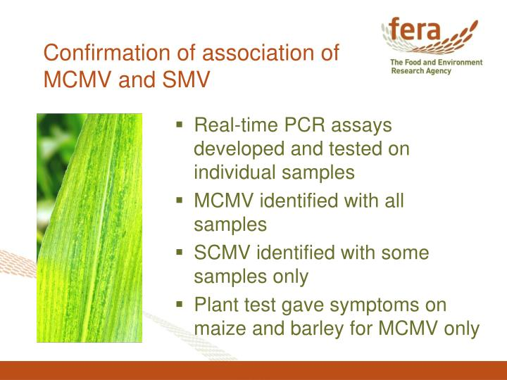 Confirmation of association of MCMV and SMV